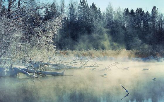 Фото бесплатно зима, озеро, коряги
