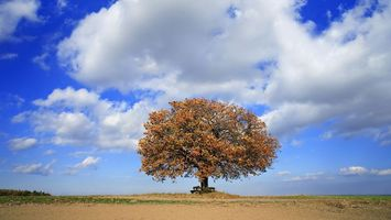 Фото бесплатно равнина, дерево, скамейка, лавочка, горизонт, небо, облака