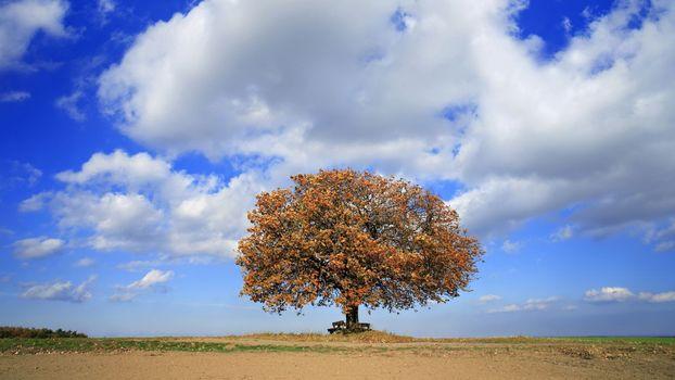 Фото бесплатно равнина, дерево, скамейка