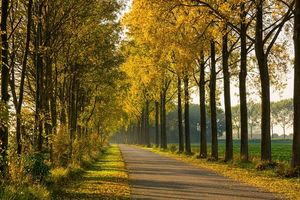 Скачать бесплатно дорога, осень заставку