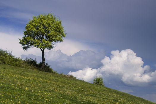 Заставки холм,небо,дерево,пейзаж