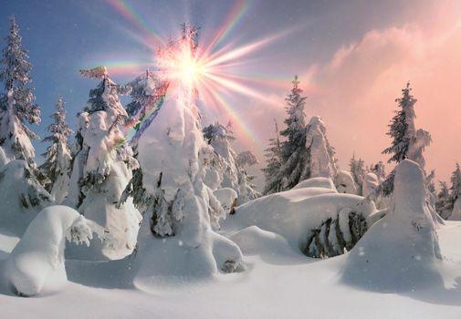 Картинки на тему снег, деревья