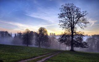 Бесплатные фото холм,дорога полевая,трава,деревья,туман,небо
