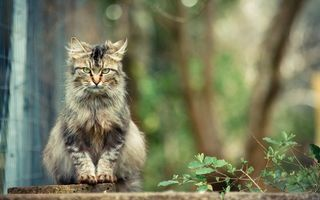 Фото бесплатно кошка, сидит, взгляд