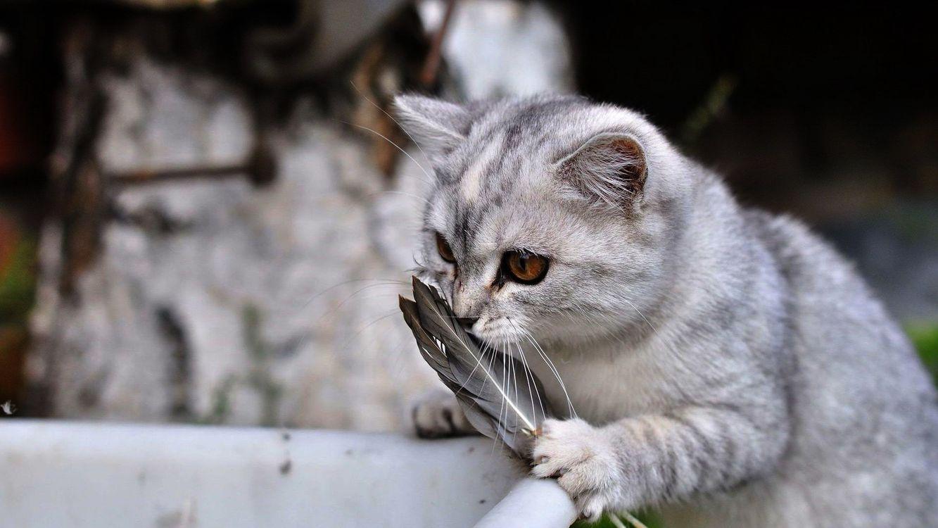Фото бесплатно кот, морда, глаза, шерсть, лапы, перья, кошки - скачать