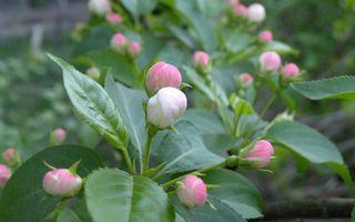 Бесплатные фото лепестки,бутоны,розовые,листья,стебли,зеленые