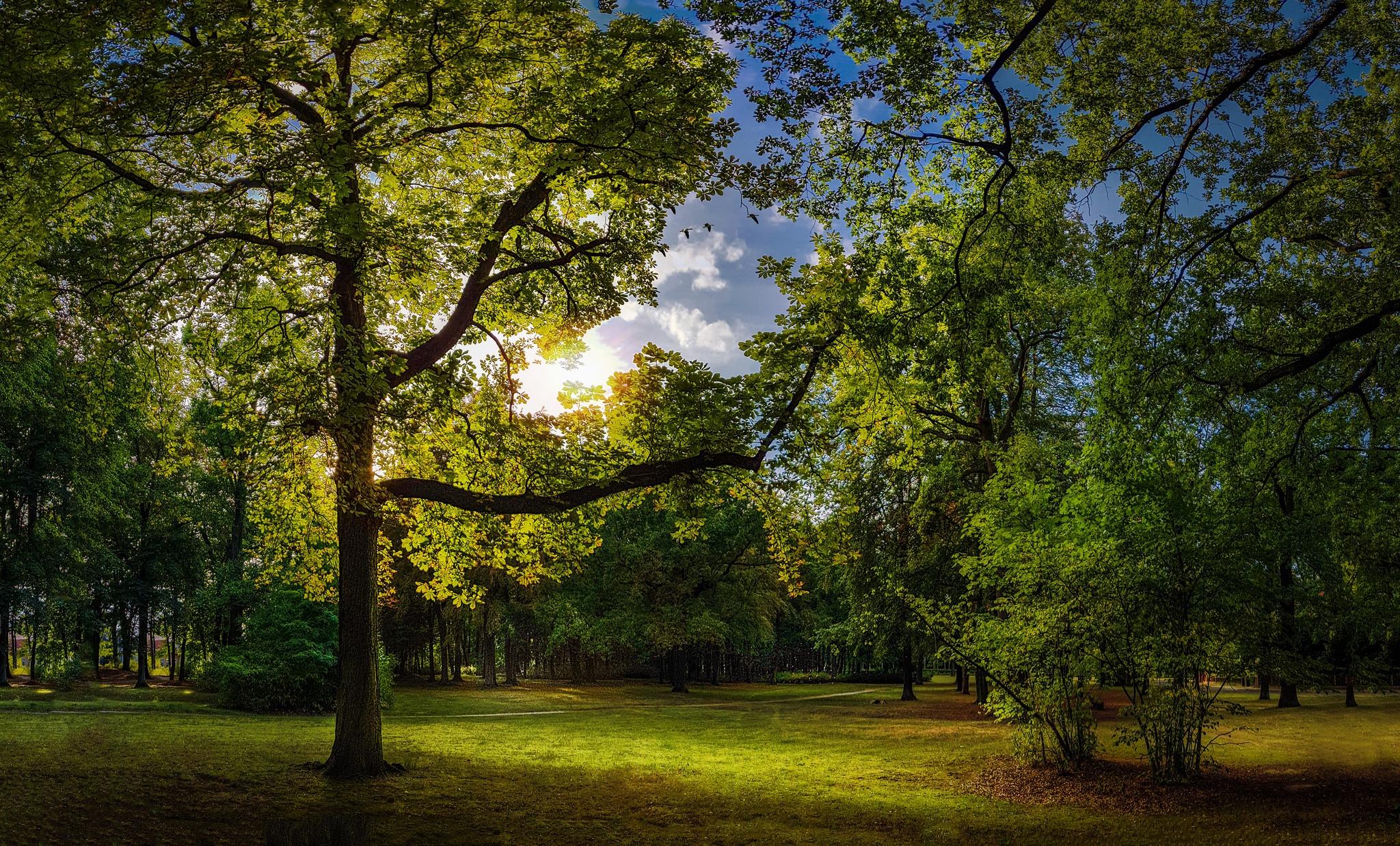 обои сад, парк, осень, поляна картинки фото