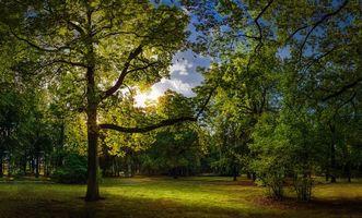 Бесплатные фото сад,парк,осень,поляна,деревья,тропинка,пейзаж