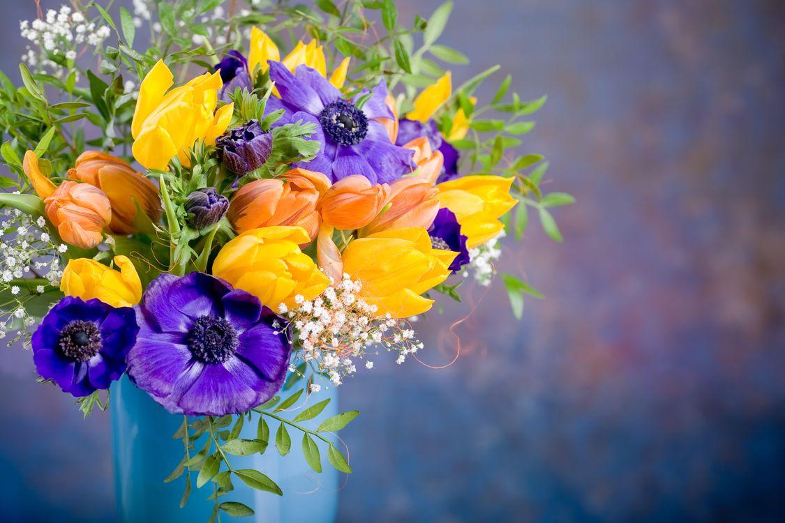 Фото бесплатно букет, ваза, тюльпаны, цветы, флора, цветы