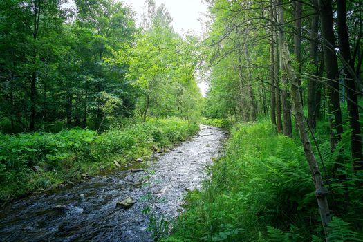 Бесплатные фото лес,деревья,река,течение,пейзаж
