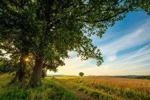 Заставки поле, деревья, дорога