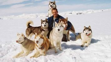 Бесплатные фото Хаски, собаки, Пол Уокер, сугробы, снег