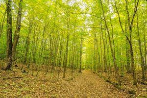 Бесплатные фото осень, лес, деревья, дорога, природа