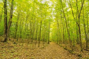 Фото бесплатно природа, дорога, осень
