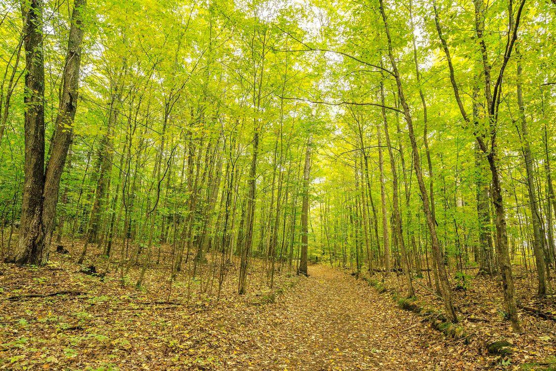 Фото бесплатно природа, дорога, осень - на рабочий стол