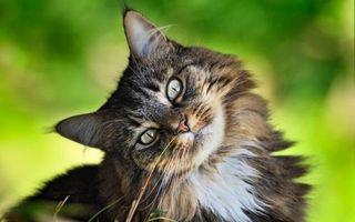 Бесплатные фото странный кот