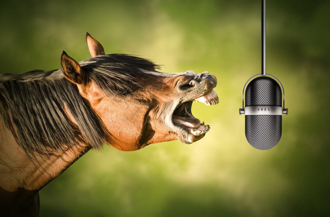 Фото бесплатно лошадь, микрофон, ржание, юмор - скачать на рабочий стол