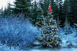Фото бесплатно новый год, с новым годом, новогодние обои, елка, декорации, новогодняя ёлка, украшения, лес, деревья, пейзаж