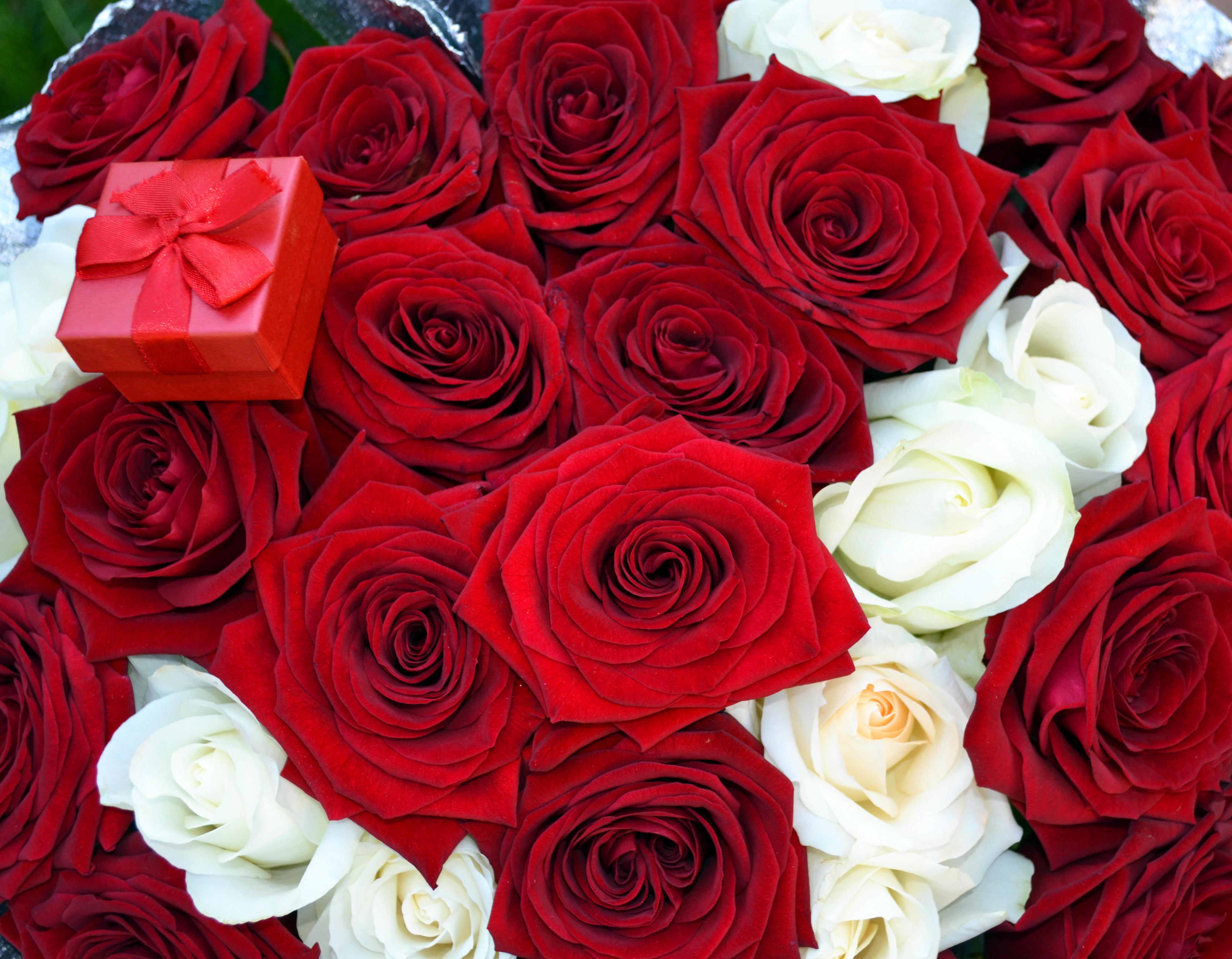 картинки алые розы большие как быстро