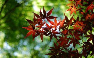 Бесплатные фото деревья,ветви,листья,красные,фон мутный