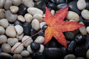 Фото бесплатно камни, осеннй лист, капли