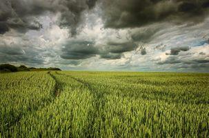 Бесплатные фото поле,небо,облака,колосья,пейзаж
