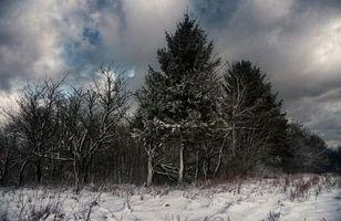 Заставки зима,деревья,закат,пейзаж