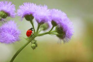 Фото бесплатно божья коровка, насекомые, растение, макро