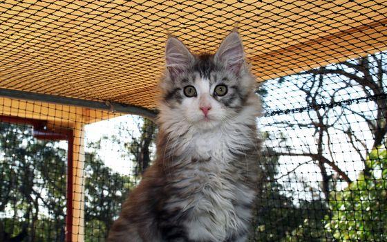 Фото бесплатно клетка, кот, морда