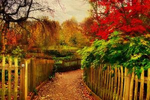 Бесплатные фото осень, деревья, дорога, забор, пейзаж, art