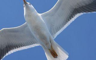 Фото бесплатно крылья, полет, лапы