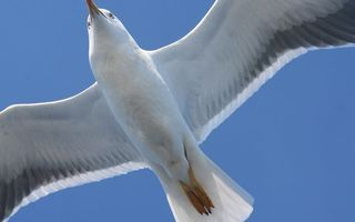 Photo free wings, flight, paws