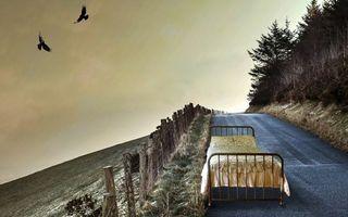 Бесплатные фото дорога,кровать,столбики,растительность,небо,птицы