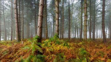 Бесплатные фото лес, деревья, природа, туман