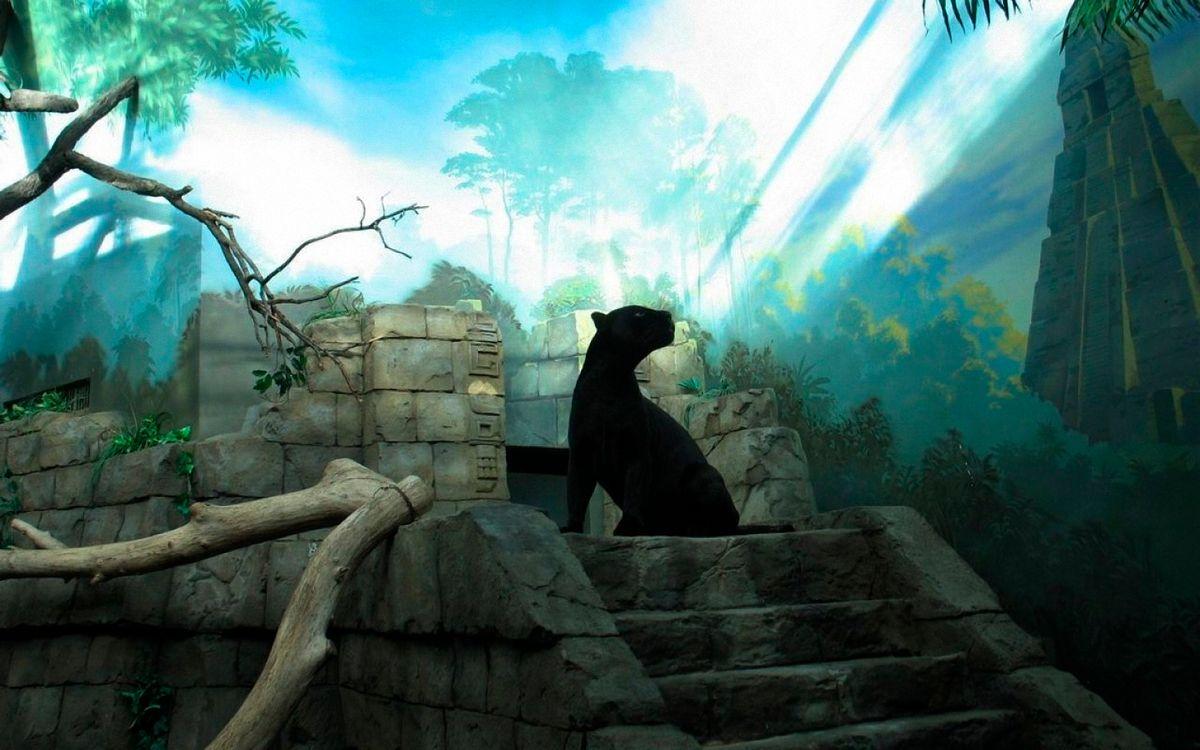 Фото бесплатно маугли, пантера, багира - на рабочий стол