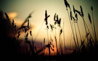 Фото бесплатно трава, ночь