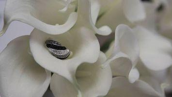 Фото бесплатно цветок, кольцо, белый