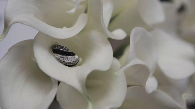 Бесплатные фото цветок,кольцо,белый