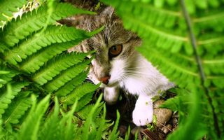 Заставки папоротник, зеленый, кошка