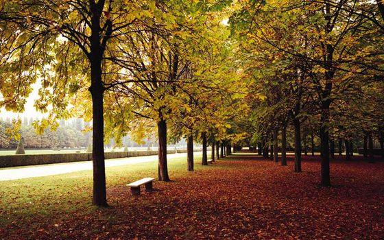 Бесплатные фото парк,деревья,листва,скамейка,дорожка