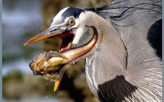 Бесплатные фото птица,перья,хохолок,клюв,ловит рыбу