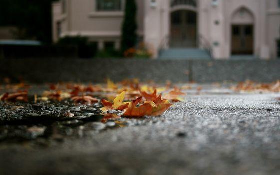 осень, листопад, асфальт, город, дорога