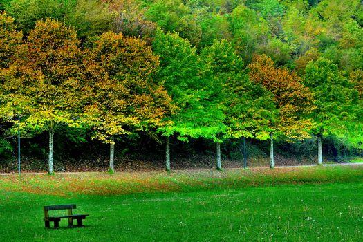 Фото бесплатно осень, парк, поле, лавочка, деревья, пейзаж