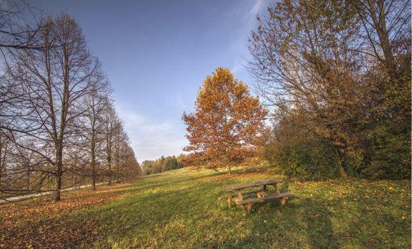 Фото бесплатно осень, поле, дорога, деревья, лавочка, пейзаж