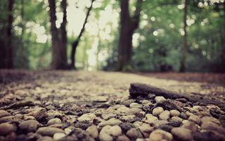 Бесплатные фото дорожка,камни,галька,земля,деревья,листва