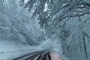 Бесплатные фото зима,снег,дорога,деревья,лес,пейзаж