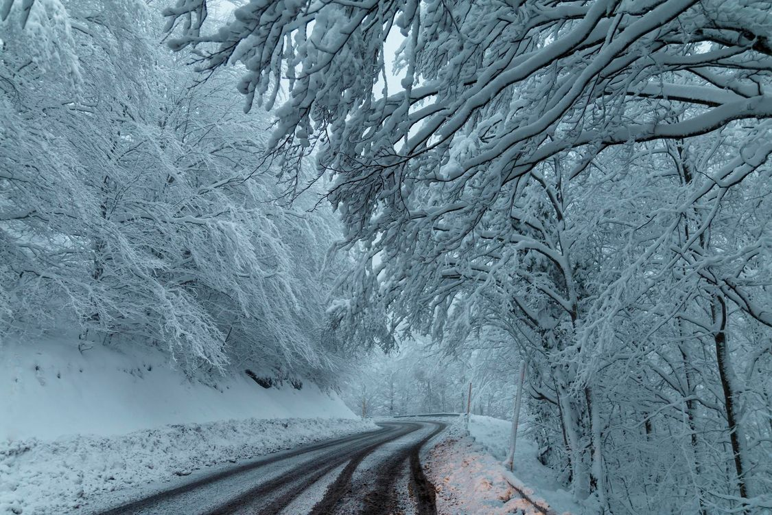 Фото бесплатно зима, снег, дорога, деревья, лес, пейзаж, пейзажи