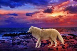 Бесплатные фото море,закат,берег,белый волк,птица,art