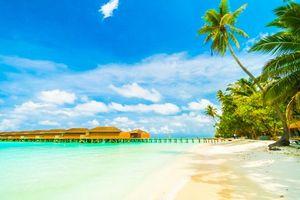Фото бесплатно пальмы, побережье, остров