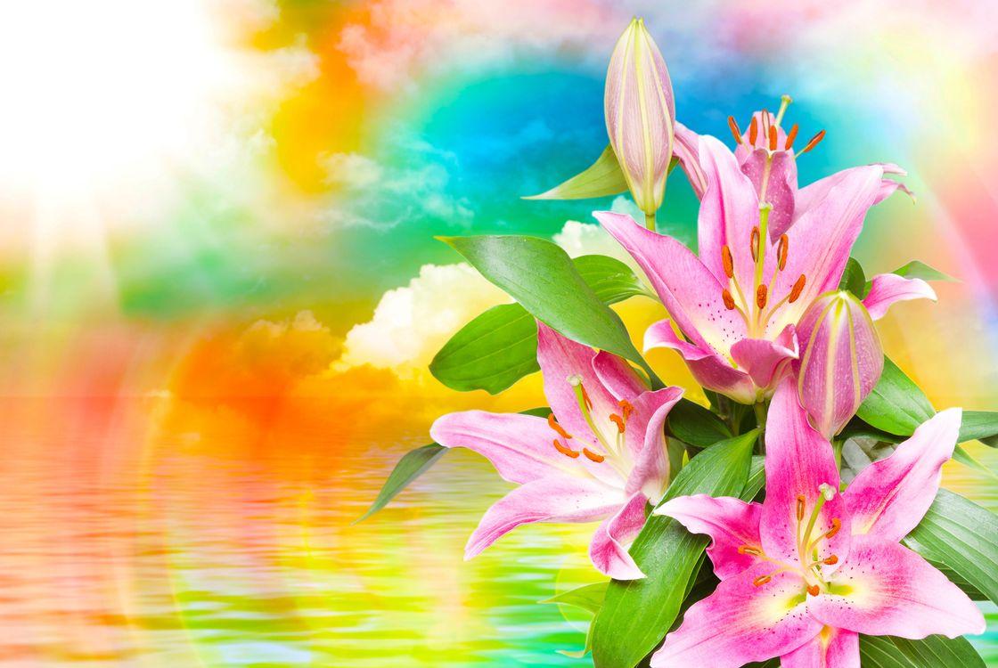 Фото бесплатно красивые цветы, лилии, лилия, красивый фон, флора, цветы крупным планом, цветы